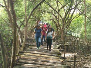 Jalur Tracking Wisata Alam Hutan Mangrove yang terbuat dari bambu